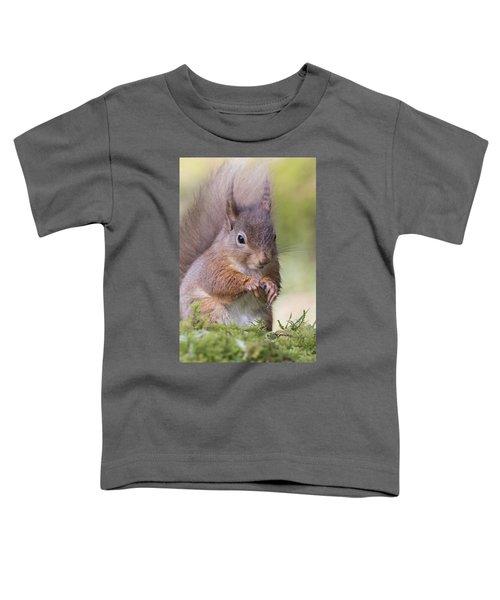 Red Squirrel - Scottish Highlands #1 Toddler T-Shirt