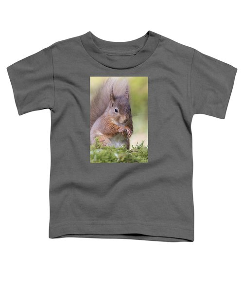Red Squirrel - Scottish Highlands #1 Toddler T-Shirt