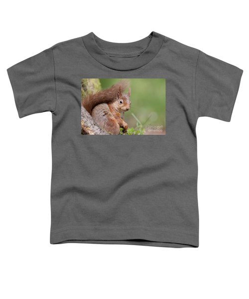 Red Squirrel - Scottish Highlands  #17 Toddler T-Shirt