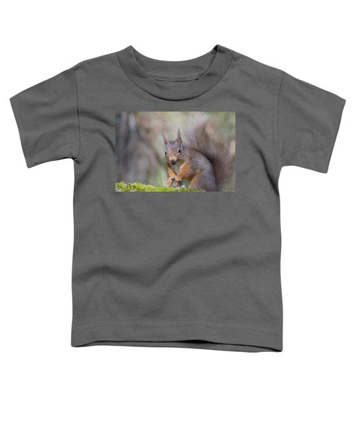 Red Squirrel - Scottish Highlands #26 Toddler T-Shirt