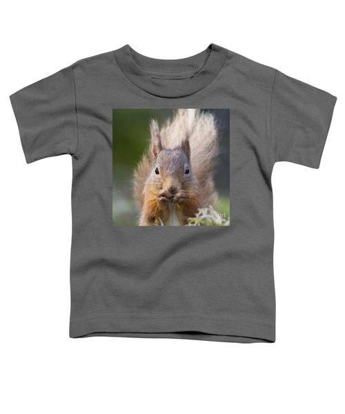 Red Squirrel - Scottish Highlands #28 Toddler T-Shirt