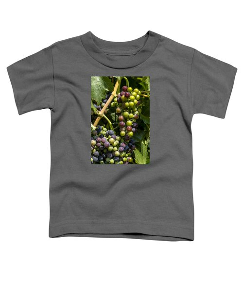 Red Wine Grape Colors In The Sun Toddler T-Shirt