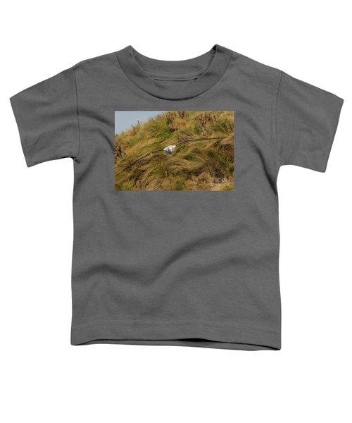 Royal Albatross 2 Toddler T-Shirt by Werner Padarin