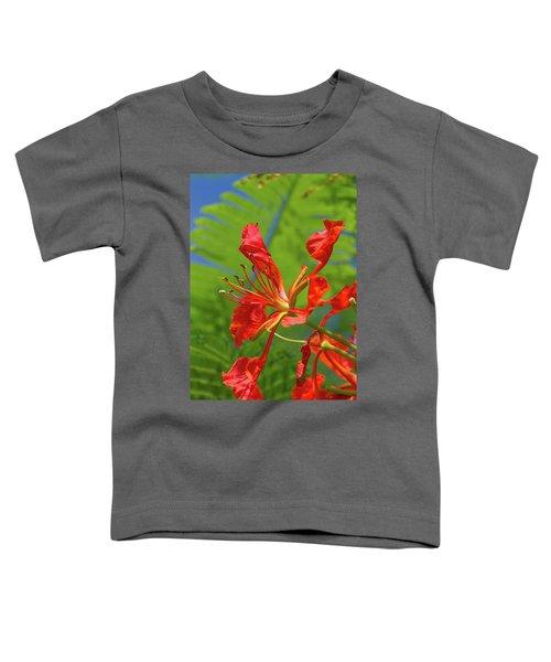 Royal Poinciana Flower Toddler T-Shirt
