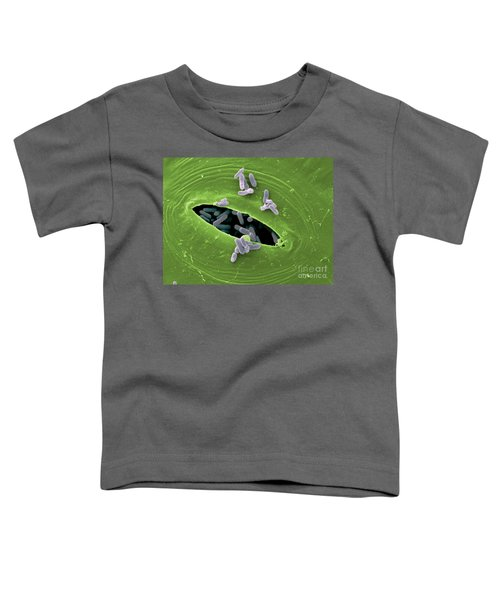 Sem Of E. Coli Bacteria On Lettuce Toddler T-Shirt