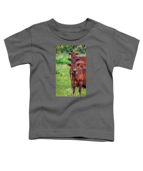 Stacked Up Cows          Toddler T-Shirt