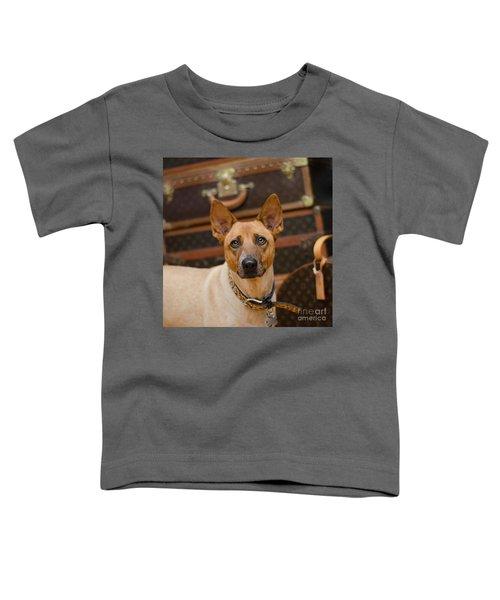 Sugar Toddler T-Shirt