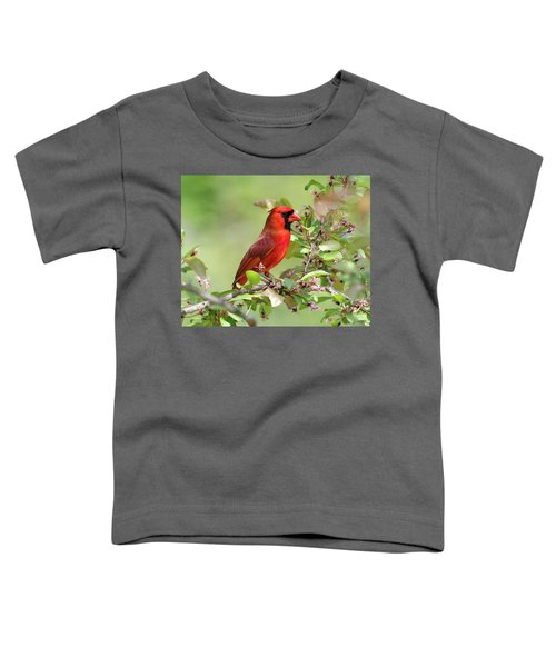 Summer Cardinal Toddler T-Shirt