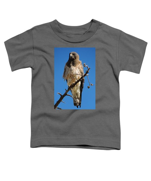Swainson's Hawk Toddler T-Shirt