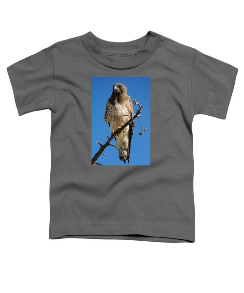 Swainson's Hawk Toddler T-Shirt