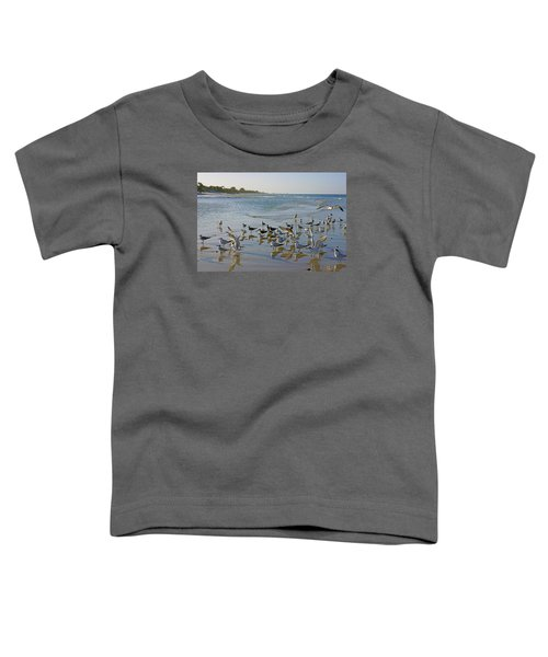 Terns And Seagulls On The Beach In Naples, Fl Toddler T-Shirt