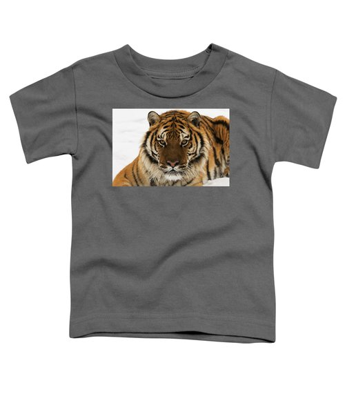 Tiger Stare Toddler T-Shirt