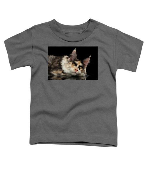 Tired Maine Coon Cat Lie On Black Background Toddler T-Shirt