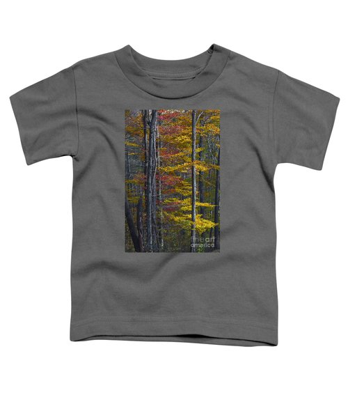 Trees With Autumn Colors 8260c Toddler T-Shirt