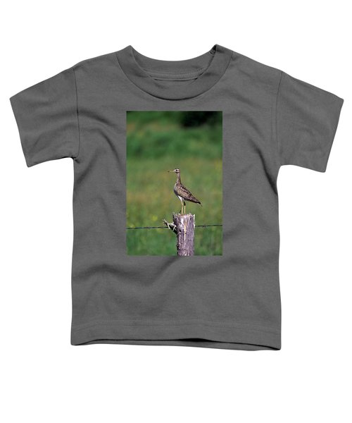 Upland Sandpiper Toddler T-Shirt