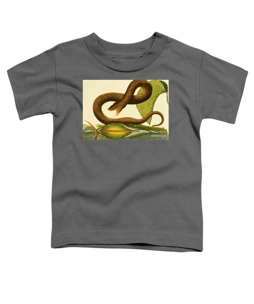Viper Fusca Toddler T-Shirt by Mark Catesby