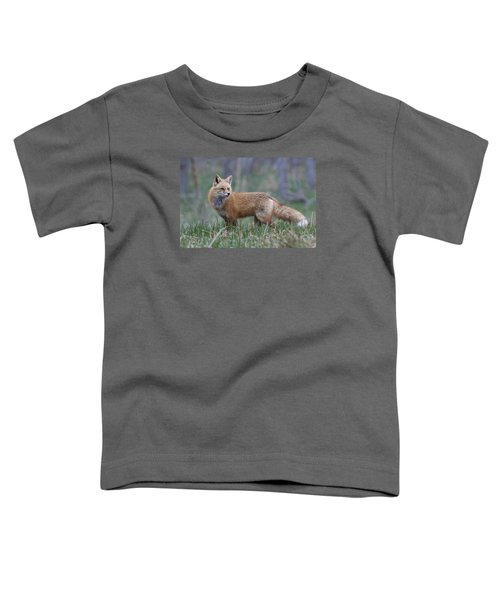 Toddler T-Shirt featuring the photograph Watchful by Gary Lengyel