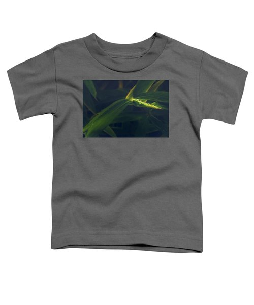 Water Catcher Toddler T-Shirt