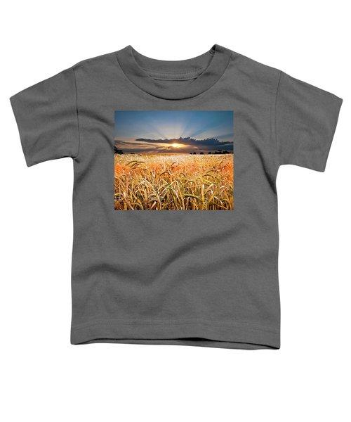 Wheat At Sunset Toddler T-Shirt