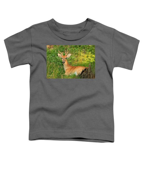 White-tail Buck Resting Toddler T-Shirt