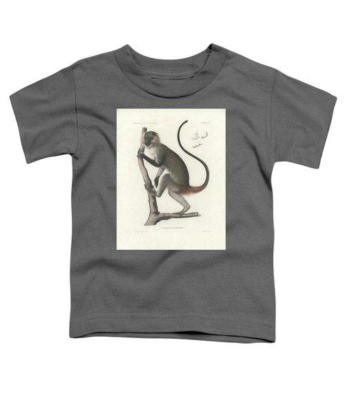White Throated Guenon, Cercopithecus Albogularis Erythrarchus Toddler T-Shirt