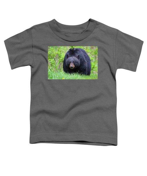 Wild Black Bear Toddler T-Shirt