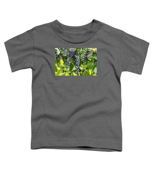 Wine Grape Colors Toddler T-Shirt