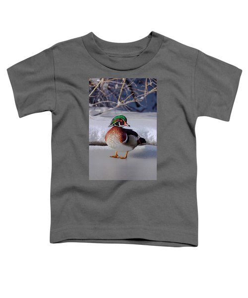 Wood Duck In Winter Snow And Ice, Montana, Usa Toddler T-Shirt