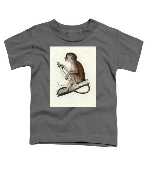 Yellow Baboon, Papio Cynocephalus Toddler T-Shirt