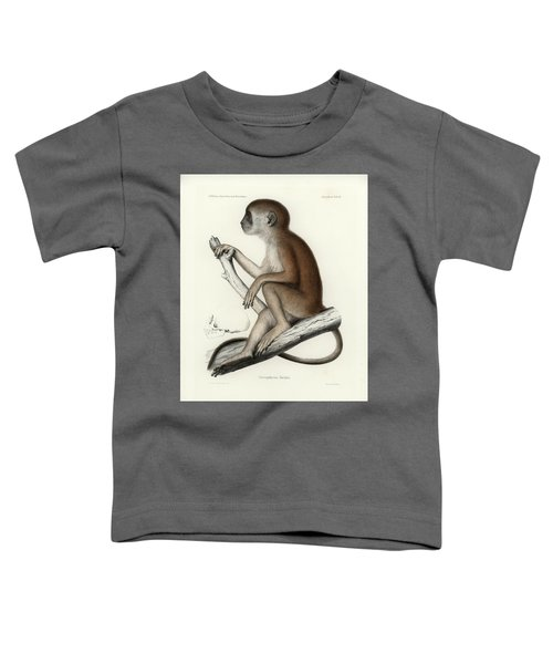 Yellow Baboon, Papio Cynocephalus Toddler T-Shirt
