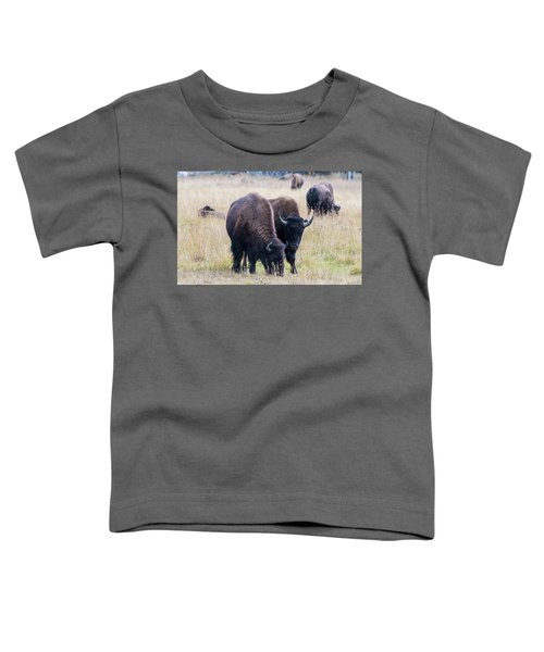Yellowstone Bison Toddler T-Shirt