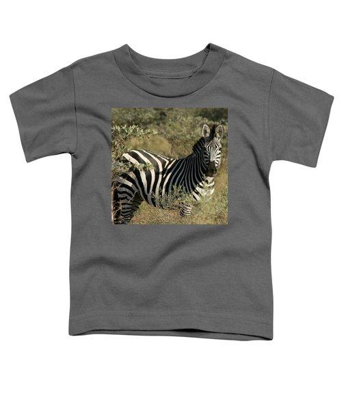 Zebra Portrait Toddler T-Shirt