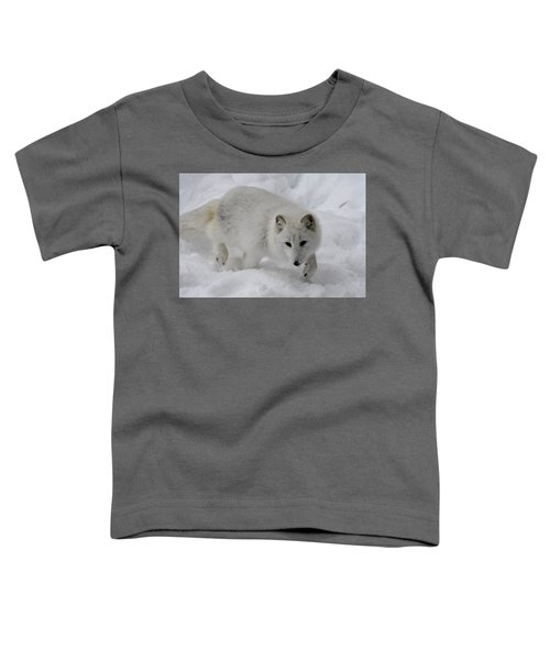 Artic Fox Toddler T-Shirt