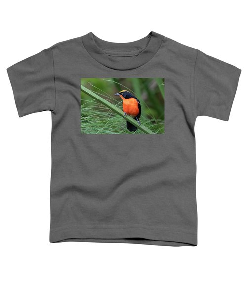 Papyrus Gonolek Toddler T-Shirt