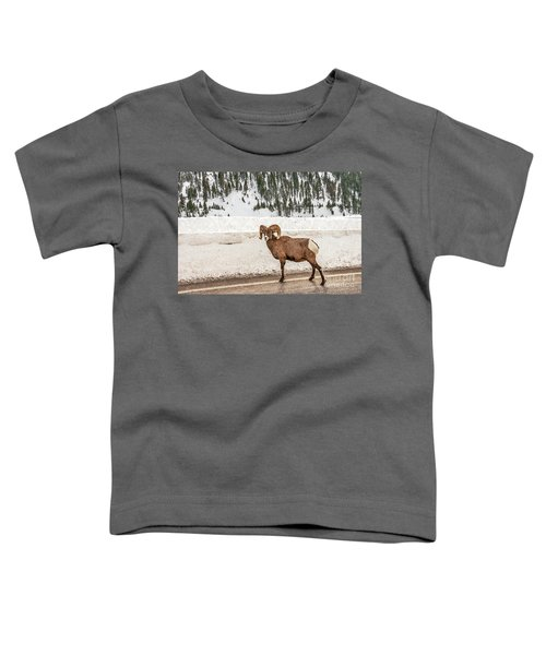 Bighorn Sheep Stopping Traffic Toddler T-Shirt