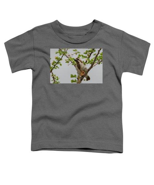 Black-throated Barbet Toddler T-Shirt
