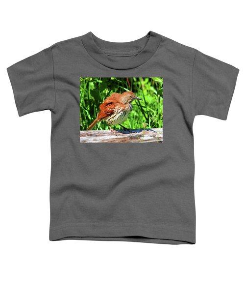 Brown Thrasher Toddler T-Shirt