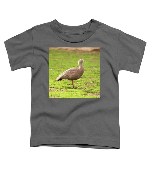 Cape Barron Goose Toddler T-Shirt