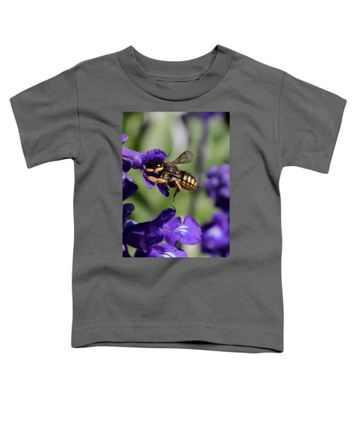 Carder Bee On Salvia Toddler T-Shirt