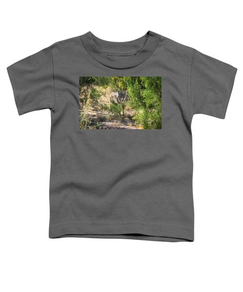 Cautious Coyote Toddler T-Shirt