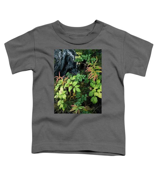Forest Floor In Early Autumn Toddler T-Shirt