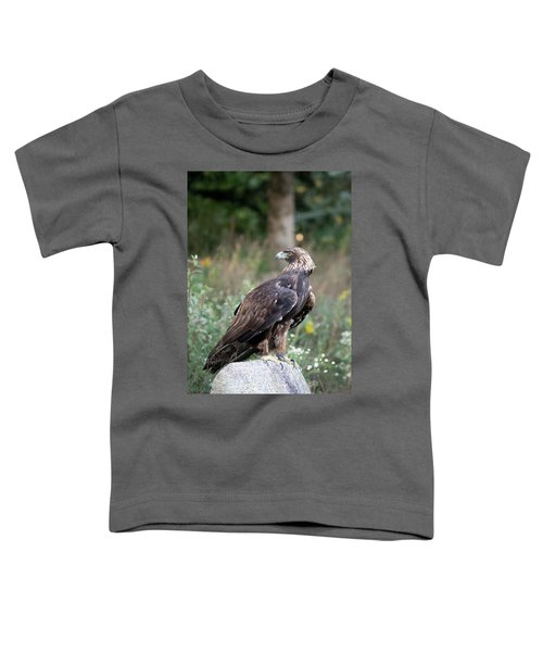 Golden Eagle On Rock 92515 Toddler T-Shirt