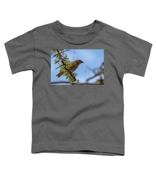 Gray-headed Social Weaver Toddler T-Shirt