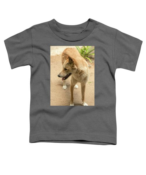 Large Australian Dingo Outside Toddler T-Shirt