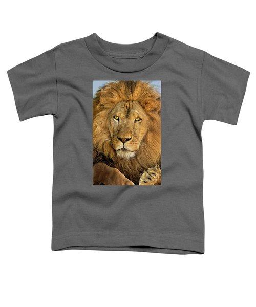 Male African Lion Portrait Wildlife Rescue Toddler T-Shirt