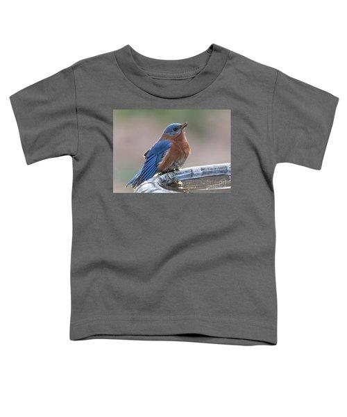Male Eastern Blue Bird Toddler T-Shirt