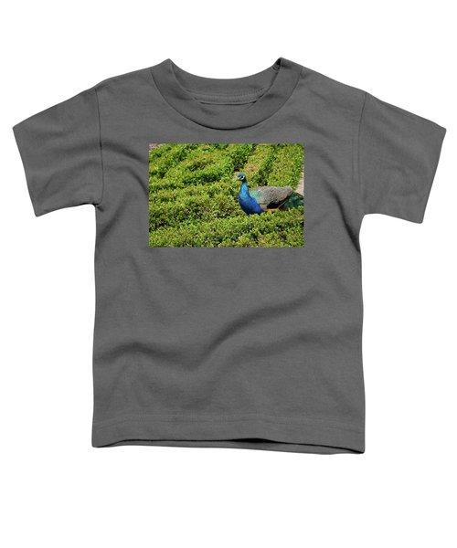 Male Peafowl In Retiro Park, Madrid, Spain Toddler T-Shirt