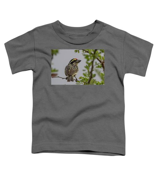Red-fronted Barbet Toddler T-Shirt