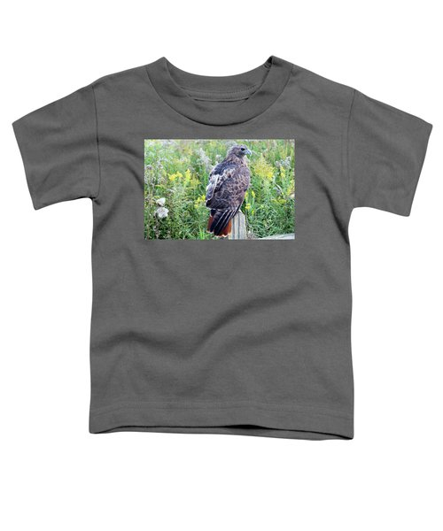 Red-tailed Hawk On Fence Post Toddler T-Shirt