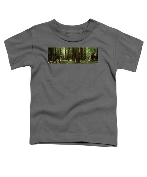Redwood Trees Armstrong Redwoods St Toddler T-Shirt